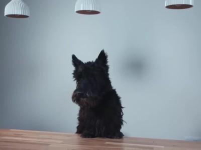 """Το """"σκυλόσπιτο"""" της Ford που θα λατρέψετε τόσο εσείς όσο και το σκυλάκι σας"""