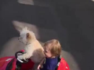 Σκύλος πάει βόλτα το παιδί