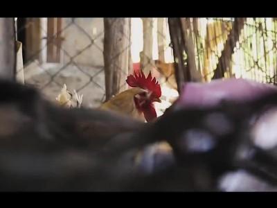 Επικό βίντεο της ΕΛΑΣ: Καλό Πάσχα στο χωριό με αστυνομικό… μορφή!
