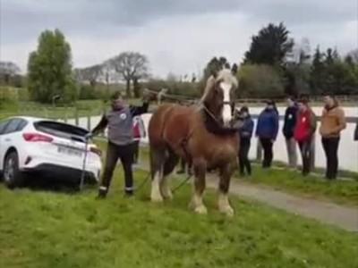 Άλογο τραβάει ένα αυτοκίνητο