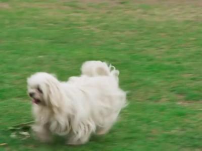 Υπηρεσίες καλλωπισμού σκύλων μέσα στο Ford Puma! (video)